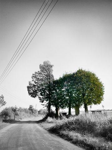 Fief Wunnen Baum und Steen in der Bauerschaft Altenburg bei Laer. Einer der Sammelpunkte der Hollandgänger im Kreis Steinfurt. Foto © Dietrich Hackenberg – www.lichtbild.org