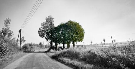 Fief-Wunnen-Baum, Laer.  Foto © Dietrich Hackenberg